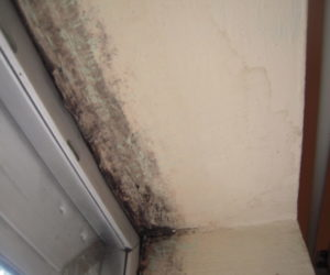 Is Mold Beyond the Scope of a Home Inspection?